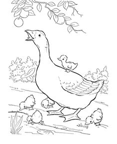 Farm animal coloring page | Geese