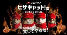 Los gatos invaden la pizza en Japón