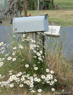 Mailboxes and white daisies.