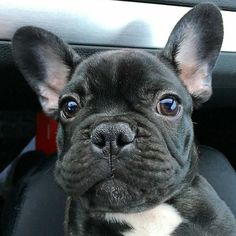 dog イヌ 犬可愛い画像まとめ http://ift.tt/1WlVKd3