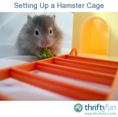 This is a guide about setting up a hamster cage. Before you bring home your furry new friend, take the time to set up your hamster's cage for comfort and safety.