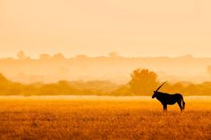 Kalahari Morning by Mario Moreno