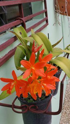 Photo in Mis Orquideas - Google Photos
