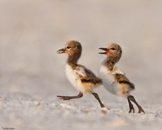 :)  Oh,the are so cute it seems they are walking towards spring!!
