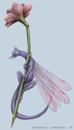"Lavendar ""dragon fly"":Tyra the Faeriedragon. by ~Isdrake on deviantART Magical Creatures, Fantasy Creatures, Fantasy Dragon, Fantasy Art, Dragon Artwork, Dragon Drawings, Small Dragon Tattoos, Mythical Dragons, Mythological Creatures"