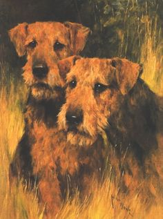 More great Arthur Wardle Airedale art
