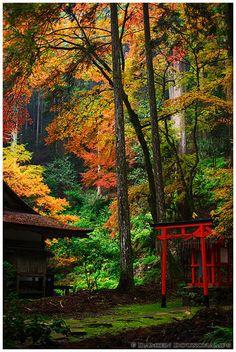 A shrine in the forest (Kouzan-ji 高山寺)