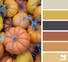 pumpkin hues