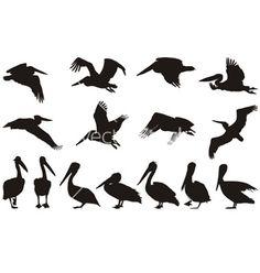 Pelican+silhouettes+vector+262260+-+by+ard on VectorStock®