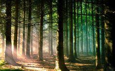 Fond d'écran avec un puissant bois chaleureux sainte