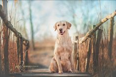 Dog Photos, Dog Pictures, Animal Pictures, Really Cute Dogs, I Love Dogs, Dog Portraits, Portrait Ideas, Cat Photography, Tier Fotos