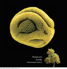 Microphotographs Reveal the Wonderfully Odd World of Plants