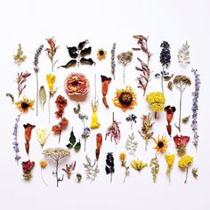 Neatly ordered objects: Dried flowers and leaves