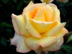Beautiful Blooms 20 (Unchained Melody)