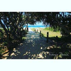 【chiipictures】さんのInstagramをピンしています。 《Today's Beach  A tunnel to the beach.  #LennoxHead #NSW #Australia  レイクから、 ビーチへぬけるトンネル。  仕事でかいた汗をレイクで流して サッパリしてからビーチへ(・∀・).笑  #Beach #diving #snorkeling #skindiving #surf #sea #ocean #surfing#lennox #scubadiving #beachlife #Byronbay #sunrise  #DIVERMAG #ビーチ #オーストラリア #スキンダイビング #シュノーケリング #ビーチライフ #バイロンベイ #波 #海 #サーフィン #ダイビング #トンネル #湖》