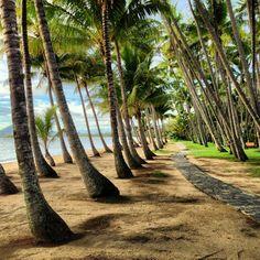 Palm Cove Beach in Palm Cove, QLD