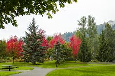 Photographing Oregon Fall color in Cathedral Park, Portland, Oregon