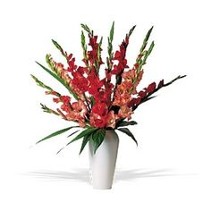 The elegance offered by these orange and red gladioli in their striking vase is simply unsurpassed. What a glorious presentation, indeed. Orange and red gladioli arrive in a tasteful geometric vase.