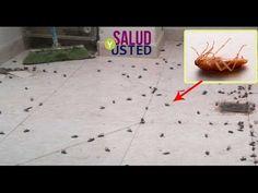 Esto es lo más efectivo para eliminar completamente todas las cucarachas de su casa para siempre! - YouTube