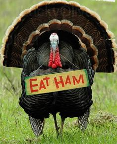 chicken eating chicken | Happy Thanksgiving to all good
