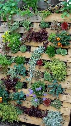 Succulent Pallet Garden& are the BEST DIY Garden & Yard Ideas! Succulent Pallet Garden& are the BEST DIY Garden & Yard Ideas! The post Succulent Pallet Garden& are the BEST DIY Garden & Yard Ideas! Garden Yard Ideas, Garden Landscaping, Backyard Ideas, Porch Ideas, Succulent Garden Ideas, Succulent Wall Diy, Garden Ideas With Pallets, Pallet Garden Ideas Diy, Garden Ideas For Small Spaces