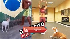Cute Dogs Cats Dog Dancing to DESPACITO Song  I will upload more and more Cute Dogs Cats Dog Dancing to Despacito Song Dont forget to subscribe my channel to watch  on Pet Lovers