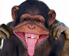 22 Funniest Monkey Face Pictures That Will Make You Laugh Funny Monkey Pictures, Face Pictures, Cute Animal Pictures, Primates, Happy Animals, Funny Animals, Cute Animals, Laughing Animals, Cute Monkey
