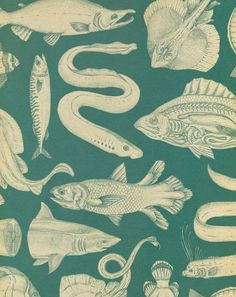 Fish pattern, Katie Scott