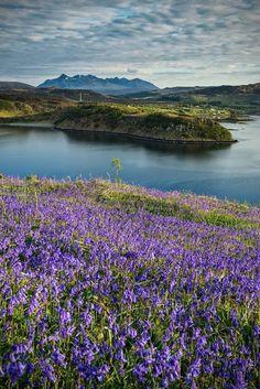 A carpet of bluebells below, the Cuillins beyond and Skye, always Skye............