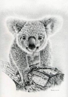 54 Beste Afbeeldingen Van Kleurplaten Dieren Klein Wild Pencil