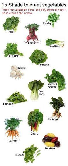 Got a shady garden? Grow these shade tolerant vegetables.