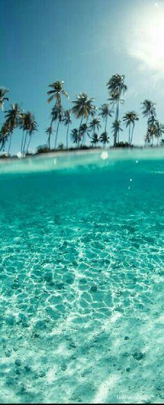 Tropical Oasis | LadyLuxuryDesigns