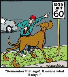 Speed limit for #Great #Dane)) #Marmaduke