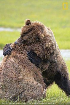 Bear hugs (or wrestling)