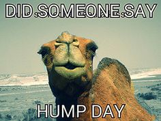 It's hump day. My mom loves camels because of the hump day camel my mom messes with me on wensday thats all she says is sam hay sam guess what day it hump day whoo whoo hump day is here so i made this.