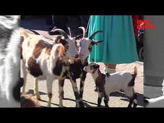 Tänzeln, reiten, bezwingen.  Wampelerreiten bei der Axamer Fasnacht. Innsbruck, Goats, Blog, Animals, Alps, Horseback Riding, Animales, Animaux, Blogging
