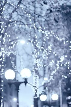 Gorgeous christmas lights