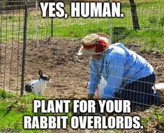 Rabbit Ramblings: Funny Bunny Monday Meme*day