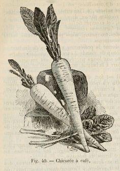 Vintage Ephemera: engravings and etchings
