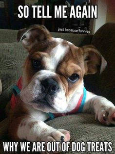 Hi find all solutions or clear your doubts about your loved one (pet) https://www.marshallspetzone.com/blog/ #buldog
