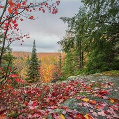 Fall colors on the Laurentians