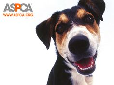 ASPCA's Six-step Disaster Preparedness Plan for Pets