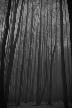 Find images and videos about black and white, trees and forest on We Heart It - the app to get lost in what you love. Wide Angle Photography, Nature Photography, Beautiful World, Beautiful Images, Forbidden Forest, Fantasy Forest, Dark Forest, Dark Places, Dark Wood