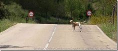 PELIGRO: Animales sueltos y tú sobre dos ruedas