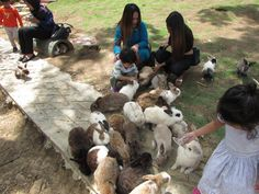 Nothing excites young children more than pets; Rabbit Farm, Prey Animals, Rabbit Breeds, Selective Breeding, Interesting Animals, The Visitors, Ancient Rome, Borneo, Travel And Leisure
