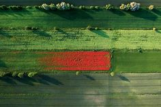 0613-spring-fields-color-eruption-poland-670.jpg Photograph by Kacper Kowalski, Panos Pictures June 2013, published by National Geographic. Poland—As shadows lengthen near sunset, spring fields near Nowe erupt in a color riot. The photographer paraglided over Pomerania to get this abstract expressionist shot: a brushstroke of red poppy weeds flowering amid green grain sprouts.