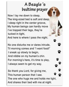Beagle Bedtime Prayer