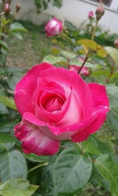 Amazing Flowers Pretty Beautiful Roses Flower Gardening Pink Photos Wildflowers Sunflowers Gaia