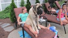 21 Dogs That Have No Idea How Big They Are (PICS)