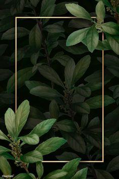 Photo Frame Wallpaper, Flower Background Wallpaper, Framed Wallpaper, Leaf Background, Flower Backgrounds, Nature Wallpaper, Watercolor Background, Vector Background, Background Patterns